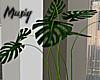M| My Studio Plant