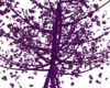 Purple Falling Leaf Tree