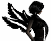 Black White Small Wings