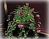 [Luv] Bdrm Pillar Plant