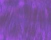 (e) purple patricia