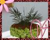 WF>Hanging Fern Plant