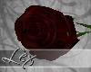 LEX black red rose