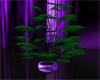 Holly's purple plant