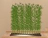 LSB Bamboo Plants
