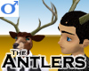 Antlers -Male