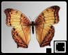 ` Last Butterflies