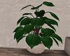 NF plant loft apar