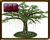 [8v4] Big Tree