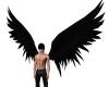 = Wings Black