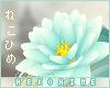 [HIME] Cara Hip Lotus
