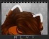 Lorak Ears [M/F]