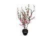 eDe Sakura Plant