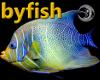 [byfish]Blue/Yellow Fish