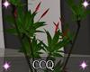 [CCQ]NC:Cafe Plant