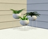 Malibu Plant Set