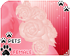 [Pets] Tila | hip roses