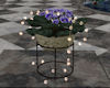 !Violet Plant & Lights