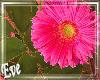 ♣ F Flower Bush