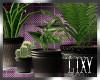 {LIX} House Plants