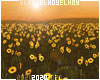 ▸E Sunflowers Field