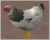 Animated Chicken