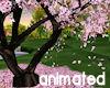 !Cherry Blossom ANIM