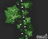 Ivy Light Plants1