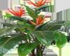 Plant Bird paradise