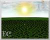 EC| Black Rose Field