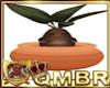 QMBR HP Mandrake Plant