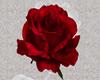 rose deco wall/floor