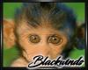 Monkey Bamboo Pic V.7