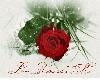 cute red rose