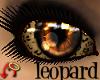 Wild.Eyes Leopard (f)
