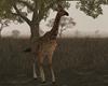 Stone Giraffe