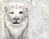 Aslan Lion from Narnia