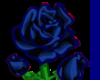 A  True blue rose