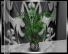 [N] Luxury Plant