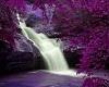 Purple Leaves Waterfall