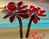 """RD"" Tropical Fan Palm"