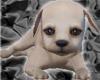 [AM]Cute Dog