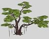(ED1)pine tree