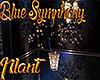 [M] Blue Symphony Plant