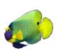 KEWL green fish