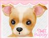 [Pup] April Chihuahua
