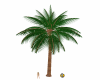 Palm-Tree-w-2-stndspts