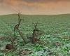 """""""Deserted Green Field"""""""