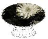 White Flower Masaman
