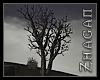 [Z] Oracle dead Tree L
